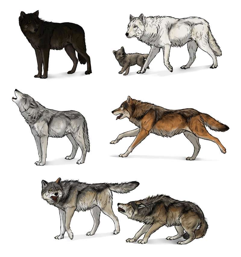 How to draw wolfs